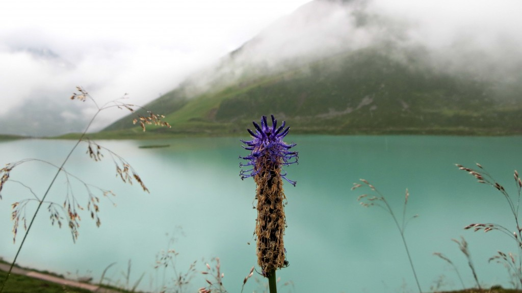 Rifflsee bloem